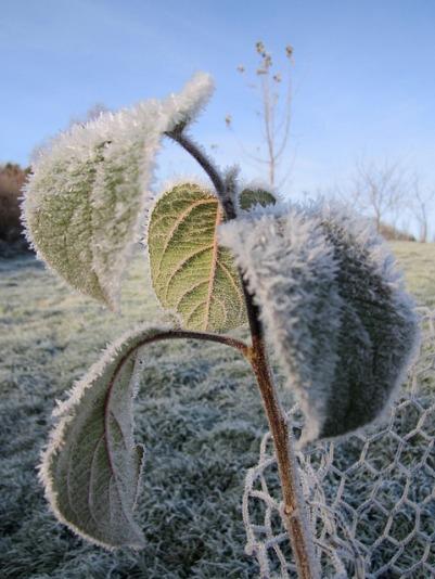 Winter frost, December 2012