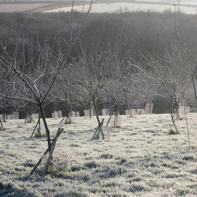 December 2012 - trees staked after a wet & windy summer