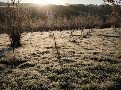 A frosty November morning, 2012