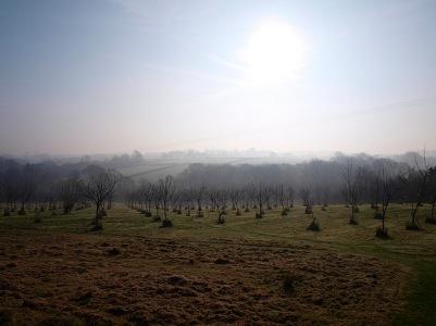 Morning sun, March 2014