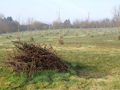 Prunings, March 2014