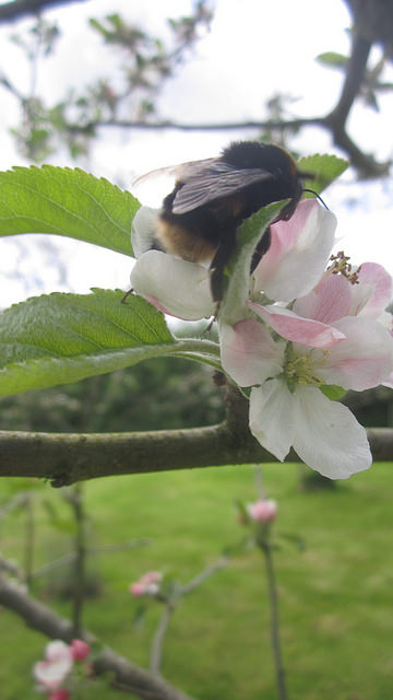Pollination, May 2014