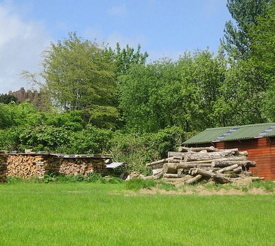 Firewood with juicing shed behind, May 2014