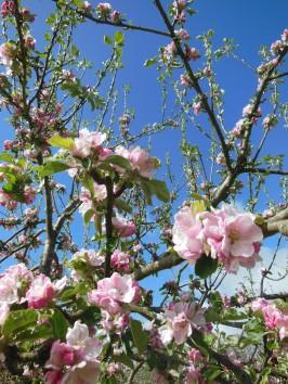 Blossom May 2018