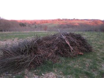 One season's prunings