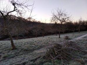 February prunings