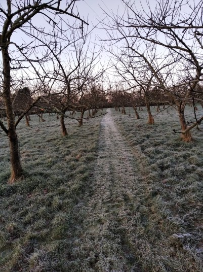 February frost